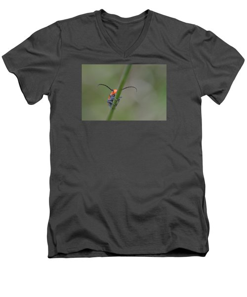 Shy Beetle Men's V-Neck T-Shirt