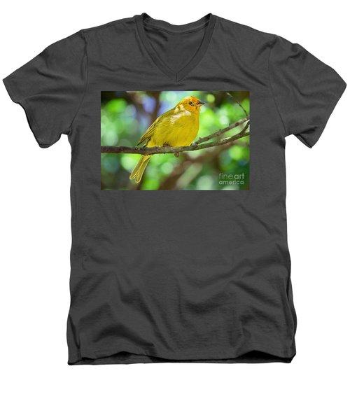 Sicalis Flaveola Men's V-Neck T-Shirt by Judy Kay