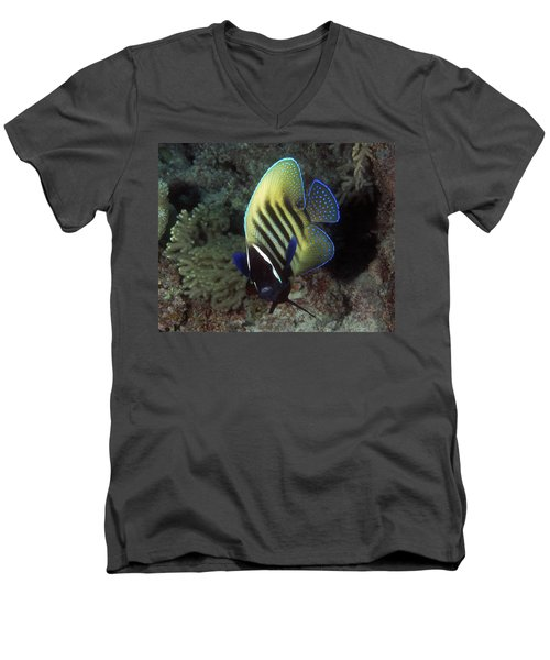 Six Banded Angelfish, Great Barrier Reef Men's V-Neck T-Shirt