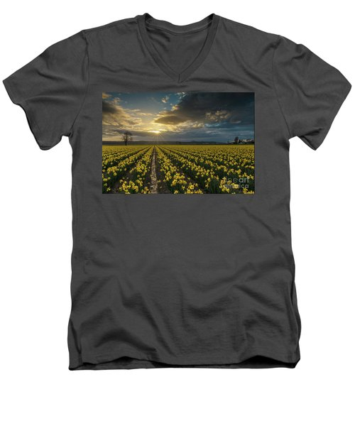 Men's V-Neck T-Shirt featuring the photograph Skagit Daffodils Golden Sunstar Evening by Mike Reid