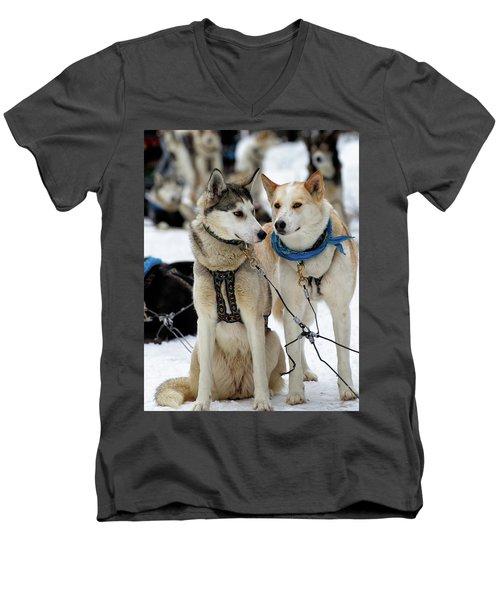 Sled Dogs Men's V-Neck T-Shirt