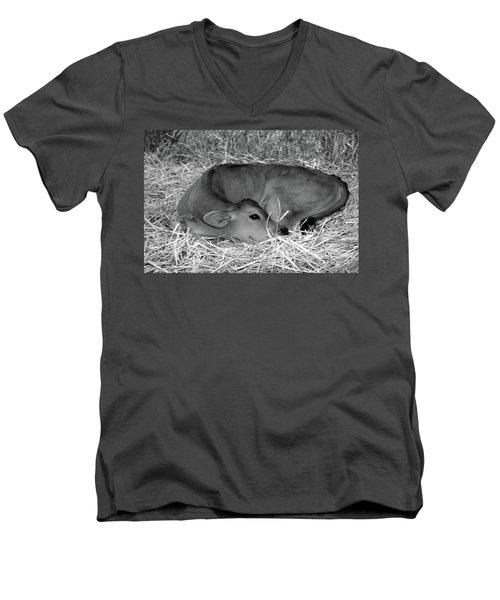 Sleeping Calf Men's V-Neck T-Shirt