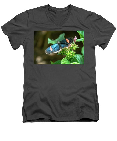 Small Black Postman Butterfly Men's V-Neck T-Shirt