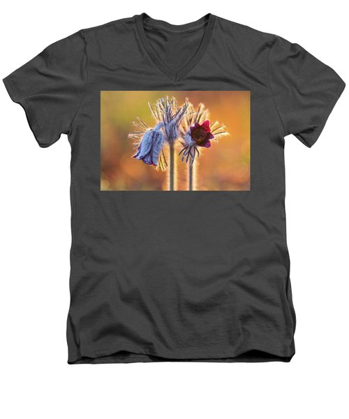 Small Pasque Flower, Pulsatilla Pratensis Nigricans Men's V-Neck T-Shirt
