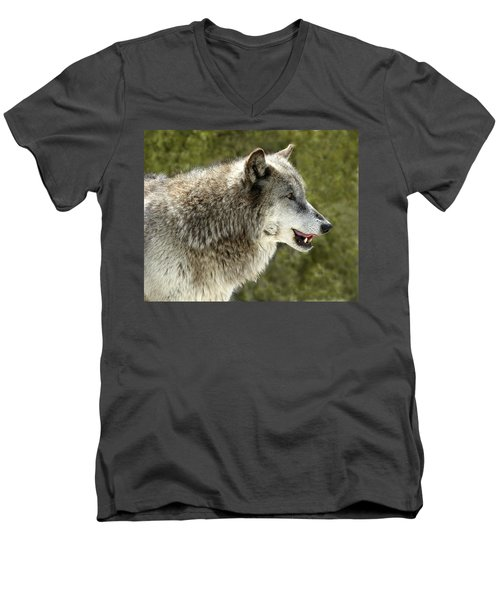 Smiling Wolf Men's V-Neck T-Shirt