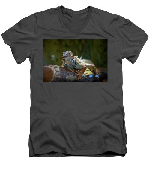 Snoozing Iguana Men's V-Neck T-Shirt by Martina Thompson