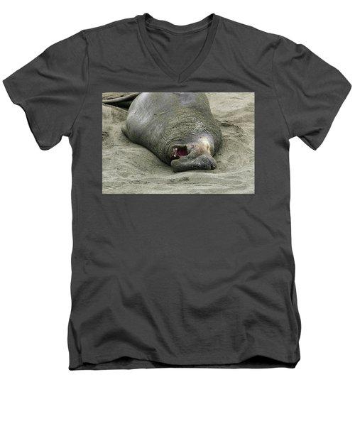 Snoring Elephant Seal Men's V-Neck T-Shirt