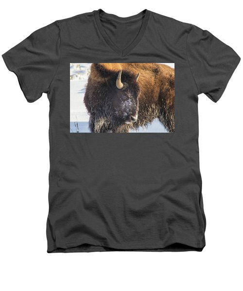 Snowy Bison Men's V-Neck T-Shirt