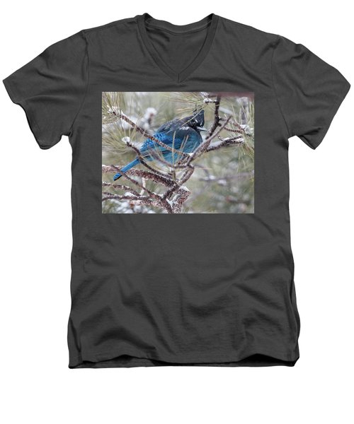 Snowy Bluejay  Men's V-Neck T-Shirt