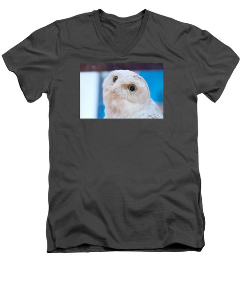 Snowy Owl Men's V-Neck T-Shirt by Kenneth Albin