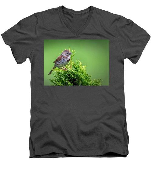 Song Sparrow Perched - Melospiza Melodia Men's V-Neck T-Shirt