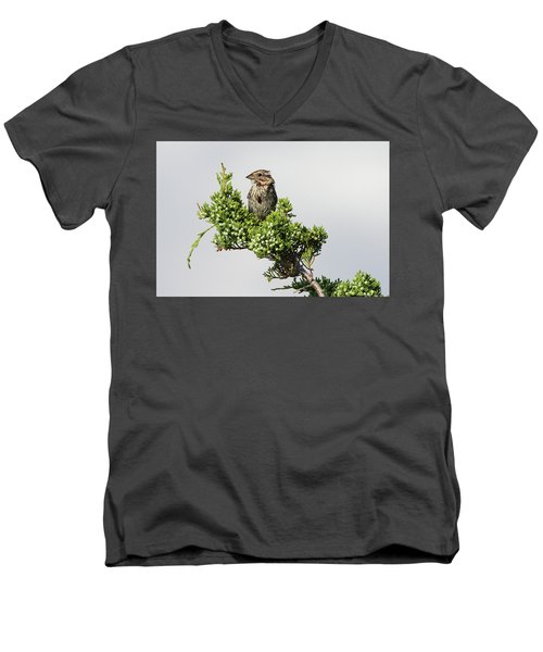 Song Sparrow Port Jefferson New York Men's V-Neck T-Shirt