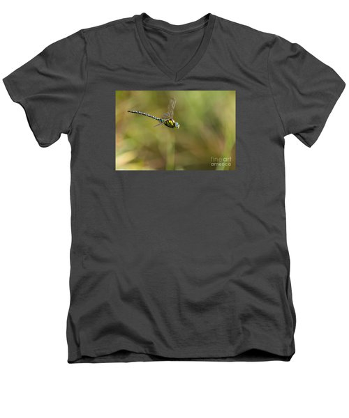 Men's V-Neck T-Shirt featuring the photograph Southern Blue Hawker Male by Jivko Nakev
