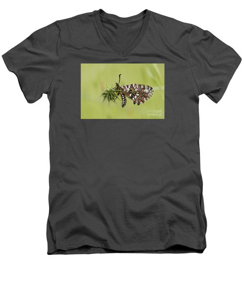 Spanish Festoon Butterfly Men's V-Neck T-Shirt by Perry Van Munster