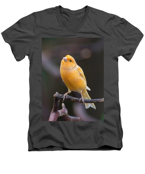 Spanish Timbrado Canary Men's V-Neck T-Shirt