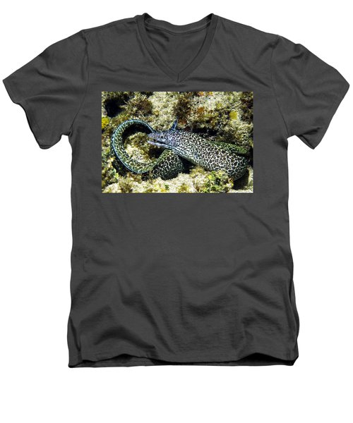 Spotted Moray Eel Men's V-Neck T-Shirt