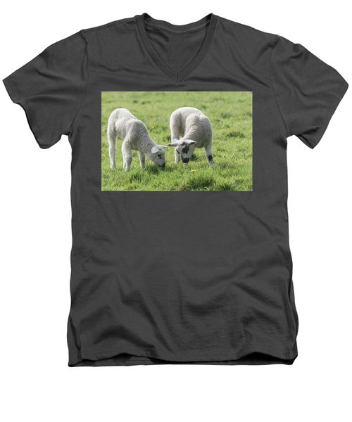 Men's V-Neck T-Shirt featuring the photograph Spring Lambs by Scott Carruthers