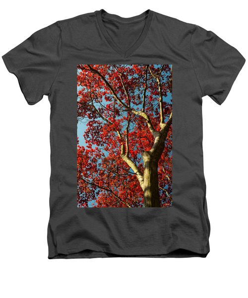 Men's V-Neck T-Shirt featuring the photograph Spring Maple by Dana Sohr