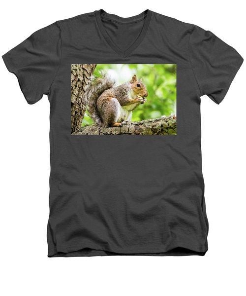 Squirrel Eating On A Branch Men's V-Neck T-Shirt