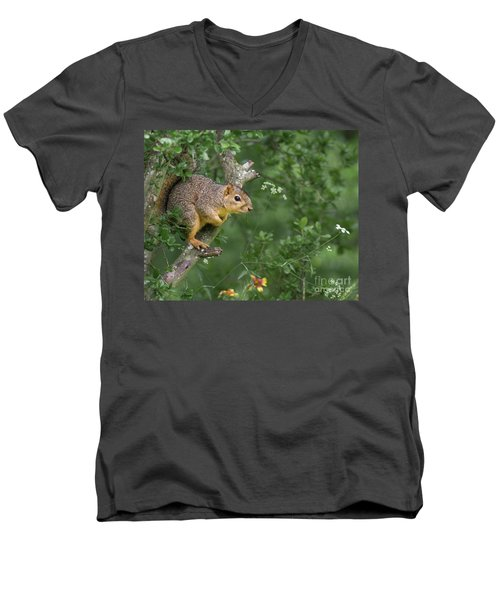 Squirrel In A Tree Men's V-Neck T-Shirt