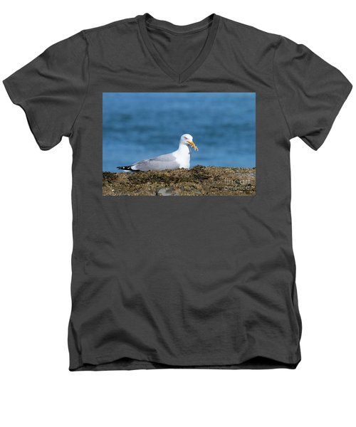 Men's V-Neck T-Shirt featuring the photograph Starfish Dinner by Debbie Stahre