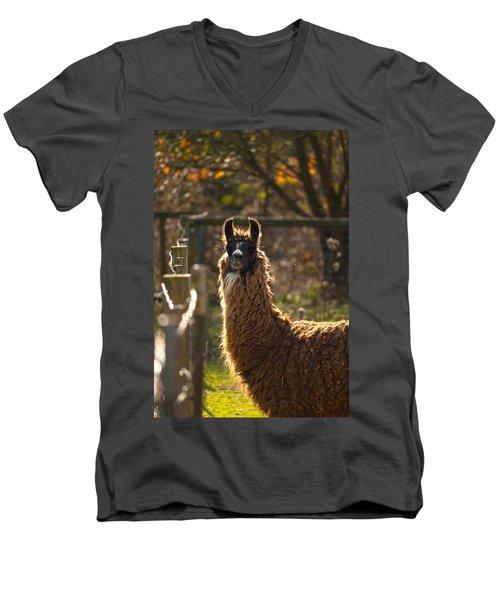 Staring Llama Men's V-Neck T-Shirt