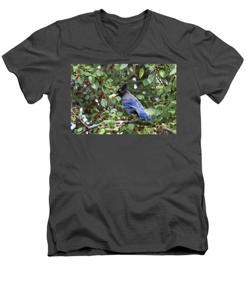 Steller's Jay Men's V-Neck T-Shirt