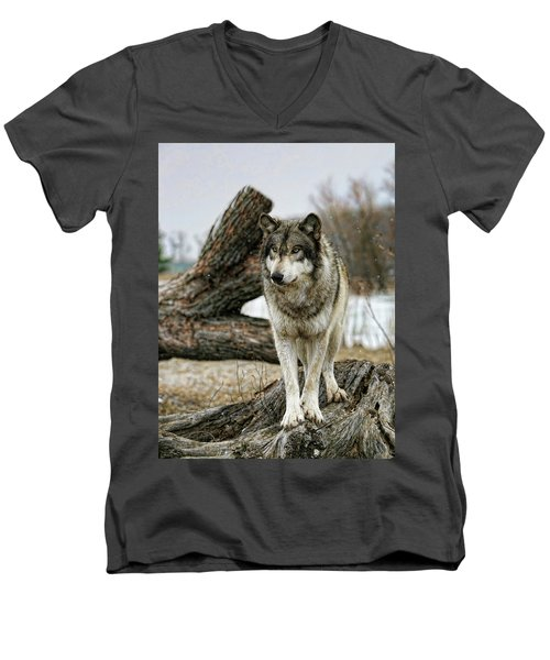 Still Wolf Men's V-Neck T-Shirt