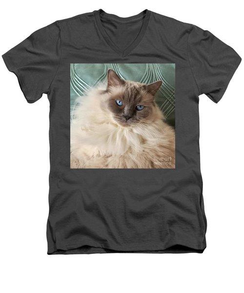 Sugar My Ragdoll Cat Men's V-Neck T-Shirt