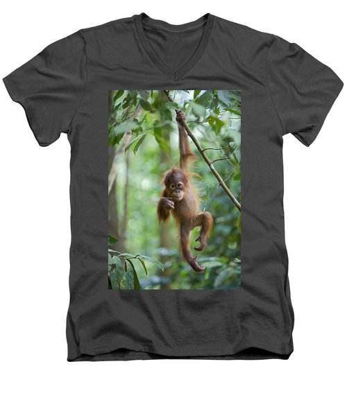 Sumatran Orangutan Pongo Abelii One Men's V-Neck T-Shirt by Suzi Eszterhas