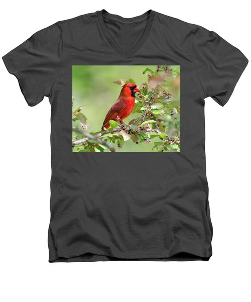 Summer Cardinal Men's V-Neck T-Shirt