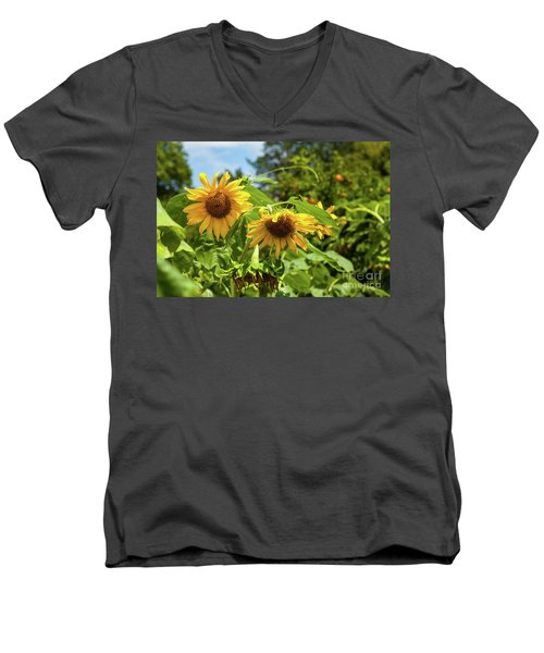 Summer Sunflowers Men's V-Neck T-Shirt