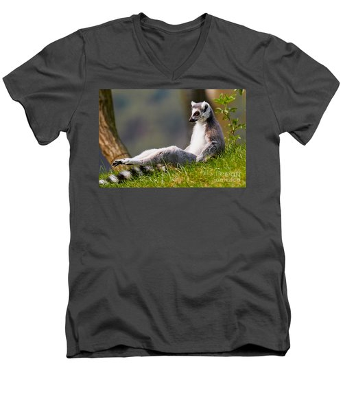 Sun Bathing Ring-tailed Lemur  Men's V-Neck T-Shirt