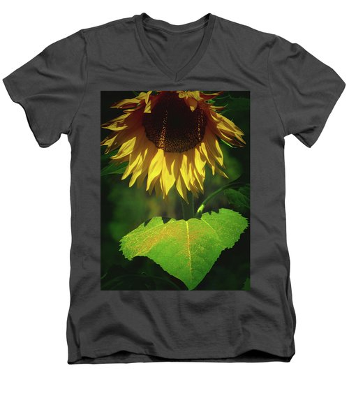 Sunflower And Gold Leaf - Beauty In The Garden - Floral Photography Men's V-Neck T-Shirt