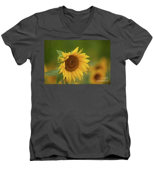 Sunflowers In Field Men's V-Neck T-Shirt
