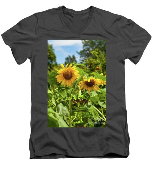 Sunflowers In Sunshine Men's V-Neck T-Shirt