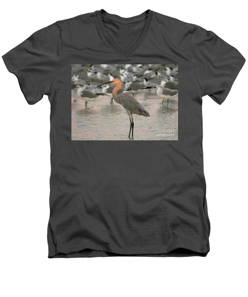 Sunlit Reddish Egret Men's V-Neck T-Shirt