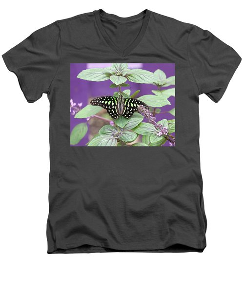 Tailed Jay Butterfly In Puple Men's V-Neck T-Shirt