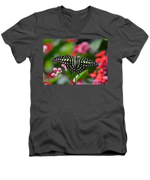 Tailed Jay4 Men's V-Neck T-Shirt by Ronda Ryan