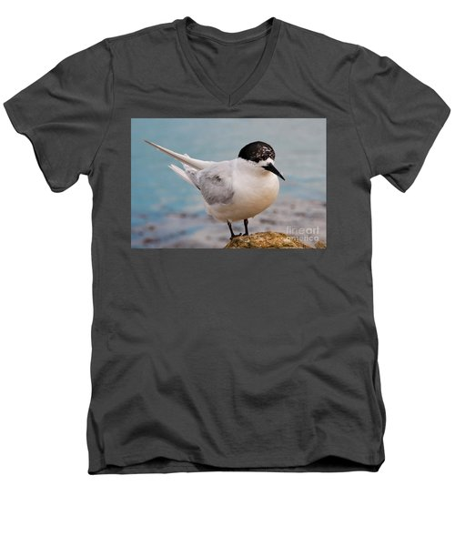 Men's V-Neck T-Shirt featuring the photograph Tern 1 by Werner Padarin