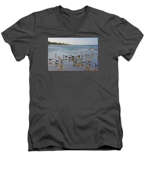 Men's V-Neck T-Shirt featuring the photograph Terns And Seagulls On The Beach In Naples, Fl by Robb Stan