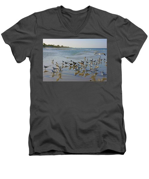 Terns And Seagulls On The Beach In Naples, Fl Men's V-Neck T-Shirt