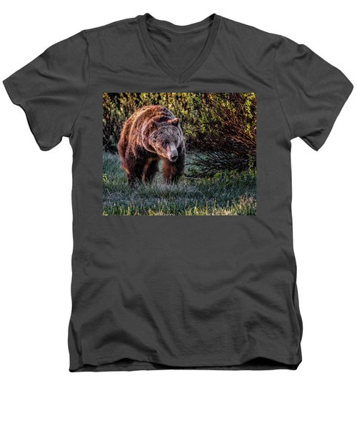 Teton Grizzly Men's V-Neck T-Shirt