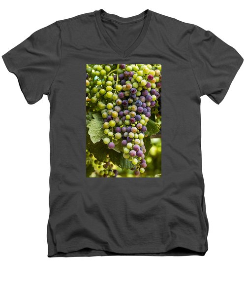 The Art Of Wine Grapes Men's V-Neck T-Shirt by Teri Virbickis