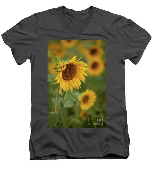 The Close Up Of Sunflowers Men's V-Neck T-Shirt