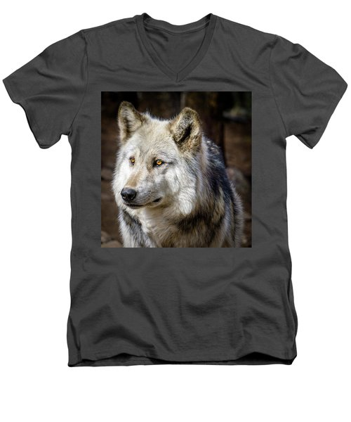 Men's V-Neck T-Shirt featuring the photograph The Gray Wolf by Teri Virbickis