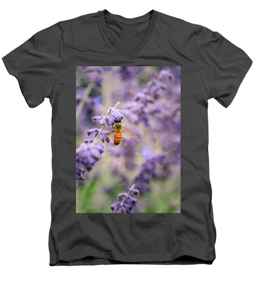 The Honey Bee And The Lavender Men's V-Neck T-Shirt