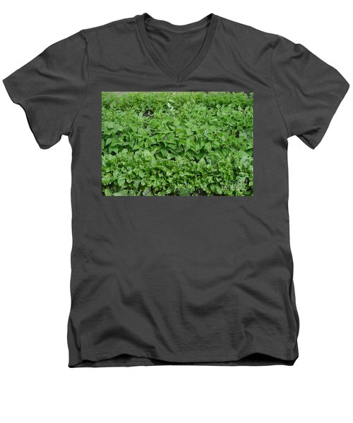 The Market Garden Landscape Men's V-Neck T-Shirt