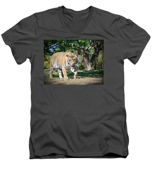 Men's V-Neck T-Shirt featuring the photograph The Prowler by Judy Kay