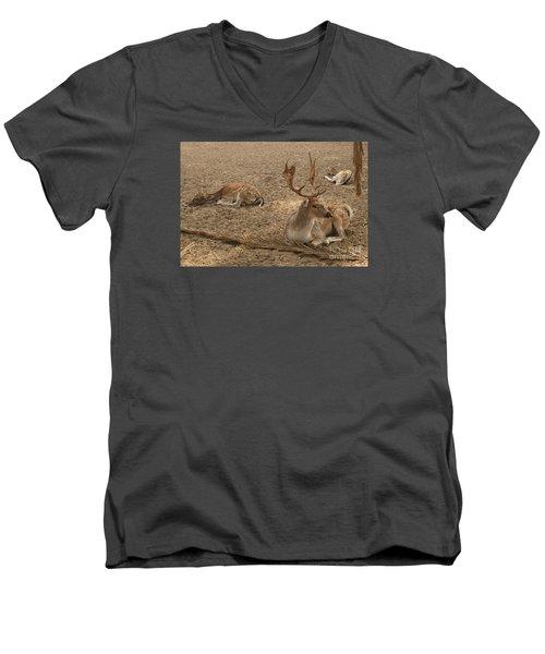 Three Deer Resting Men's V-Neck T-Shirt